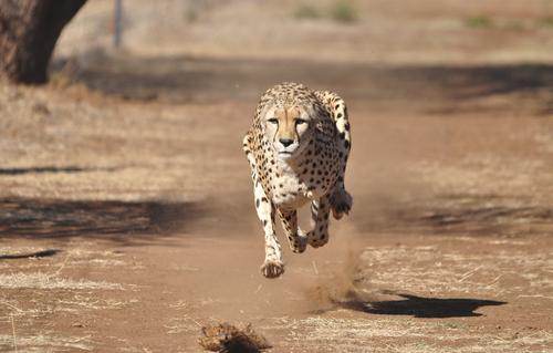 Rock the Safari